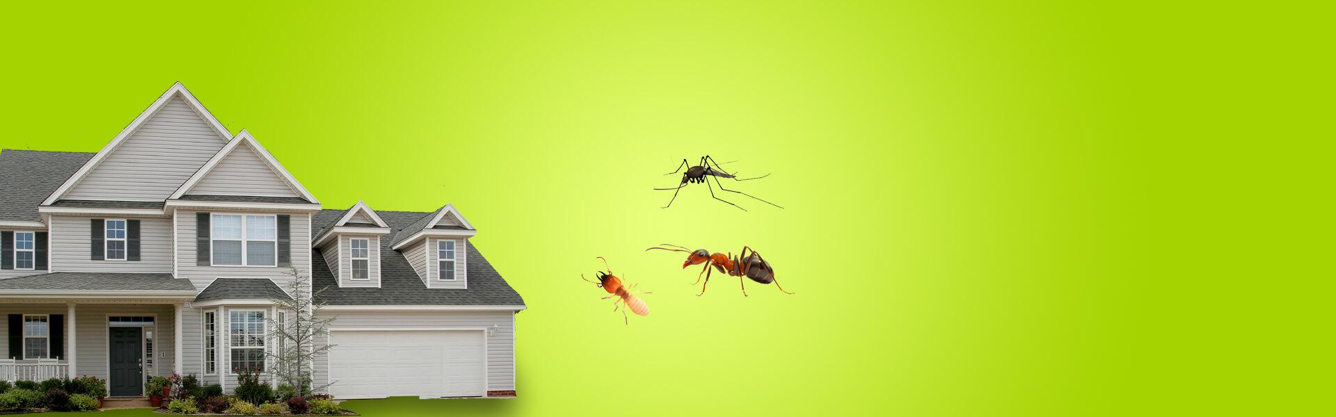 Pest ControlServices inDetroit