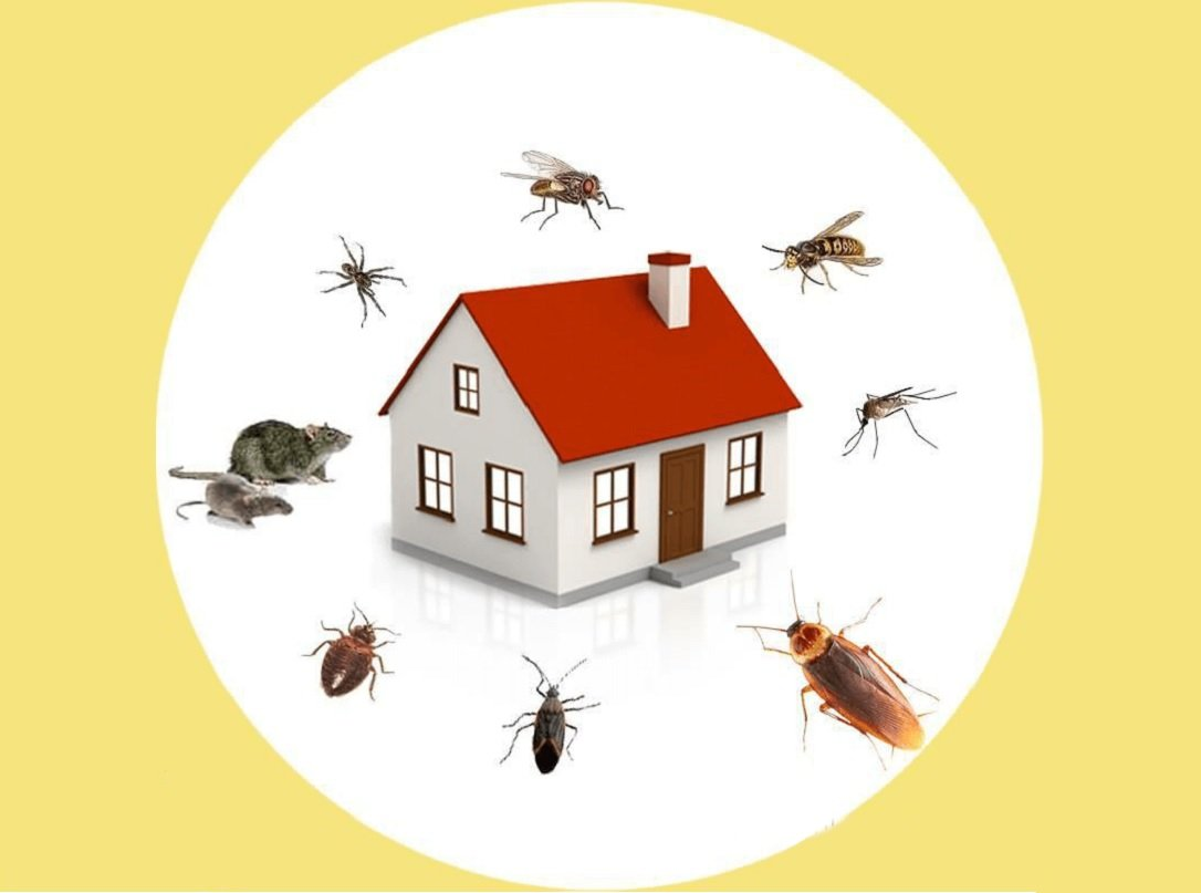 Detroit Affordable Pest Control Companies Pest City Usa