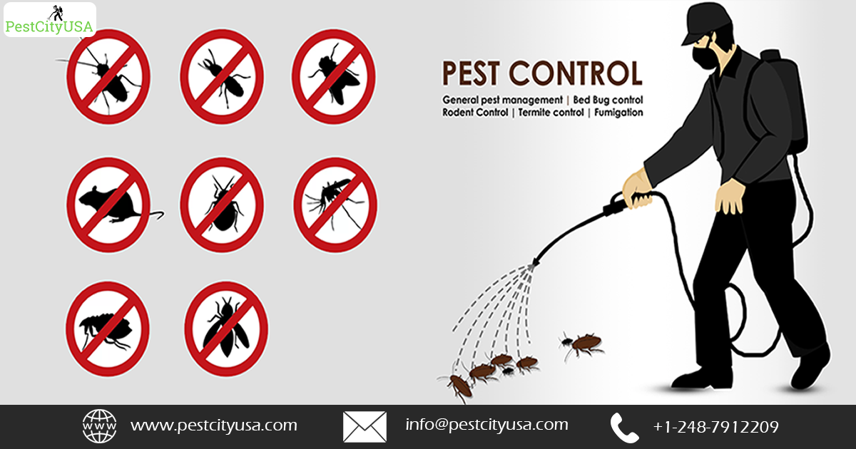 Pest Control Warren